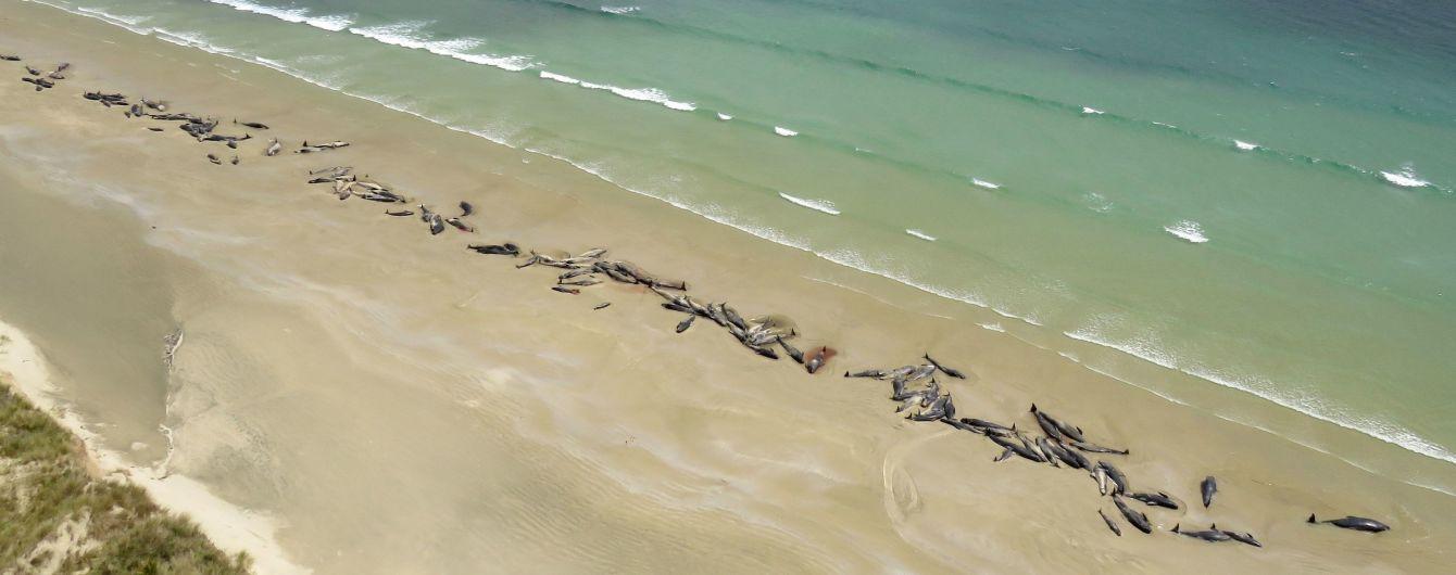 Более сотни черных дельфинов погибли на берегу в Новой Зеландии