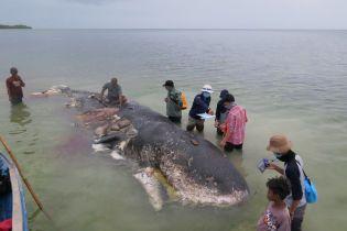 Шість кілограмів сміття у шлунку. В Індонезії знайшли померлого від пластику кита