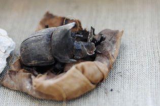У Єгипті вперше знайшли колекцію муміфікованих жуків-скарабеїв