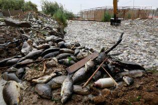 В Ираке произошел массовый мор рыбы, из-за загрязнения рек жизни миллионов людей угрожает опасность