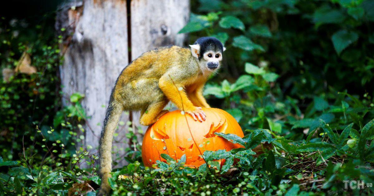 Животные празднуют Хэллоуин
