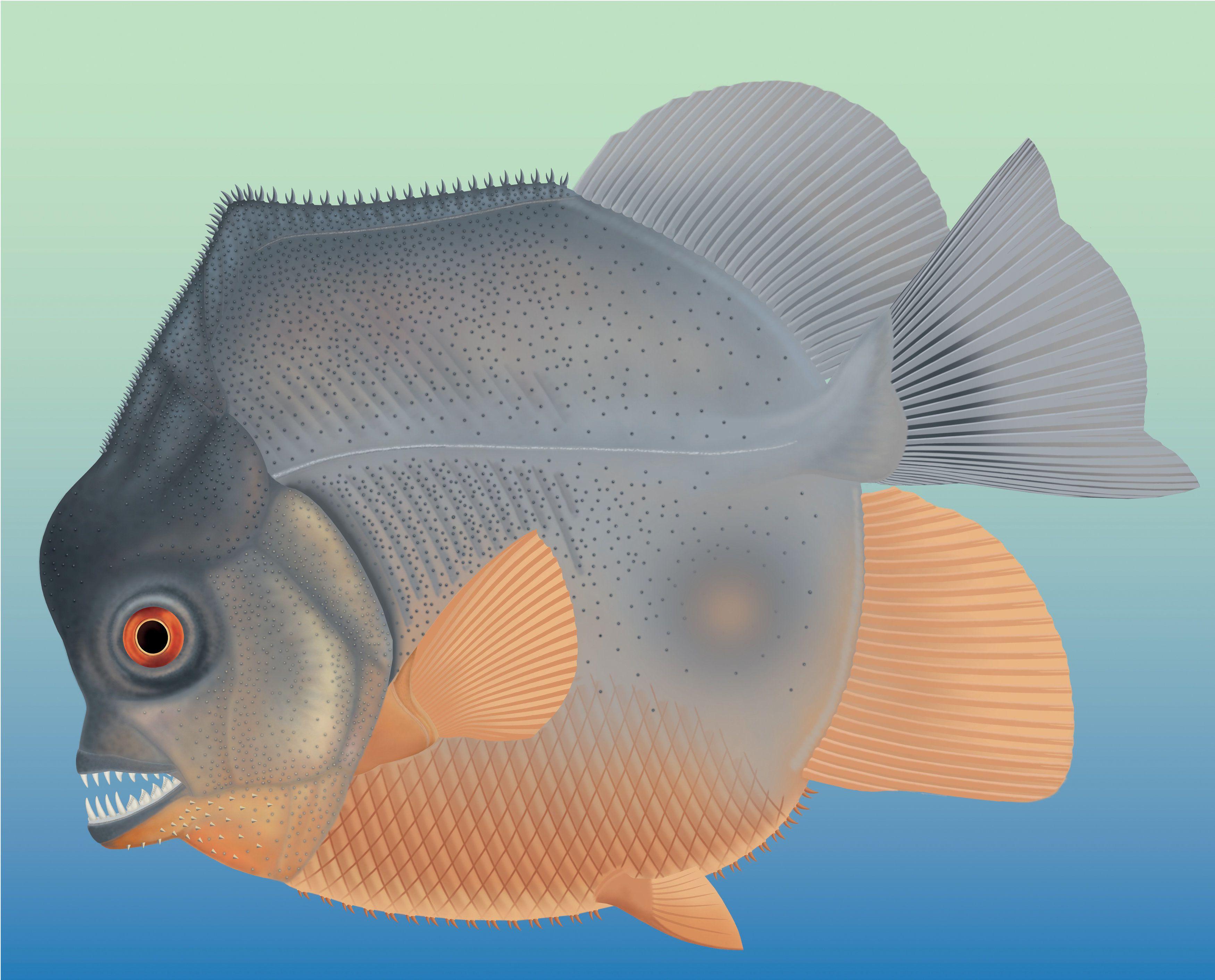 Найдавніша хижа риба_2