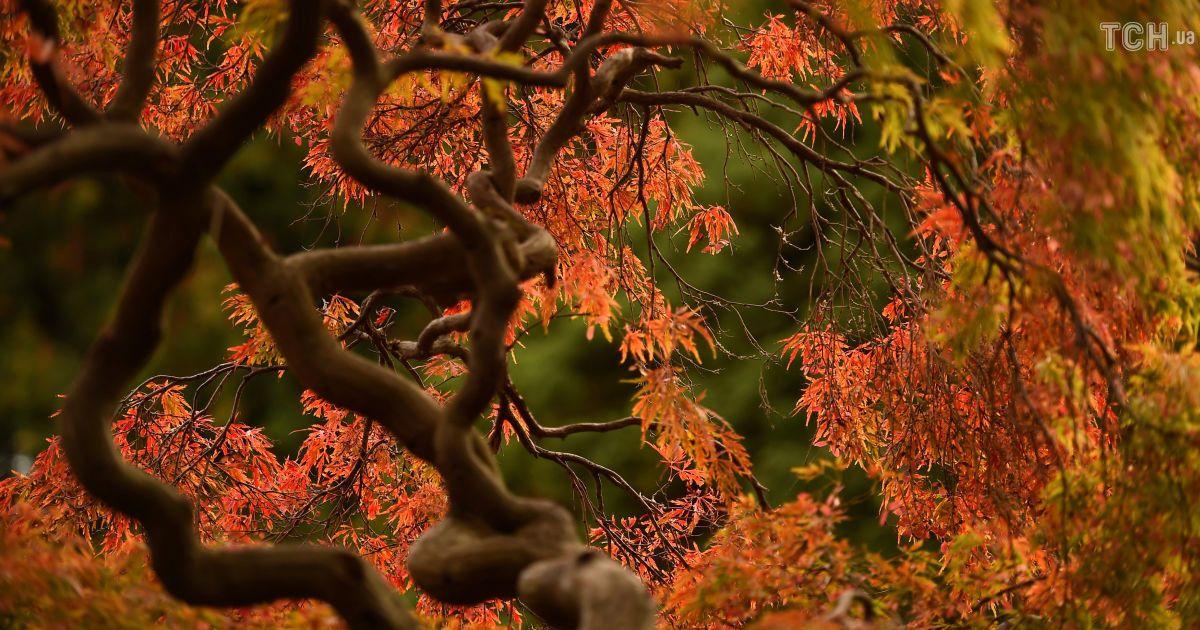 Осень в Ирландии @ Reuters