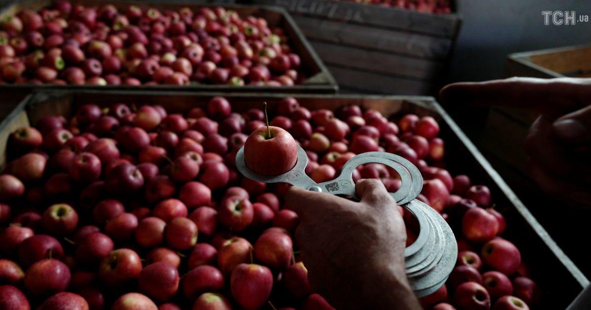 Яблоки по 50 копеек за кило: небывалый урожай обвалил цены на Днепропетровщине
