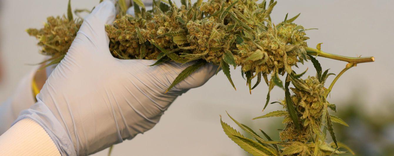 В Новой Зеландии разрешили употреблять медицинскую марихуану