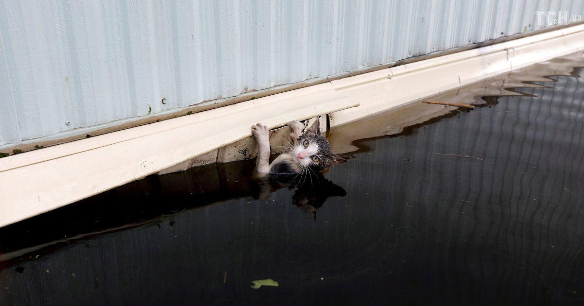 """Порятунок чотирилапих друзів: у США допомагають уникнути шторму """"Флоренс"""" котам, собакам і коням"""