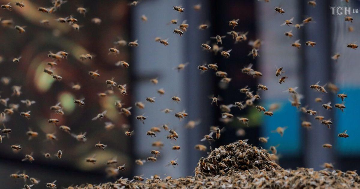 Атака бджіл у центрі Нью-Йорка