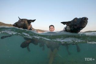 Собаче пиво і перегони на воді. У Хорватії влаштували змагання для песиків