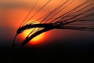 Украина в этом году собрала рекордный урожай зерна
