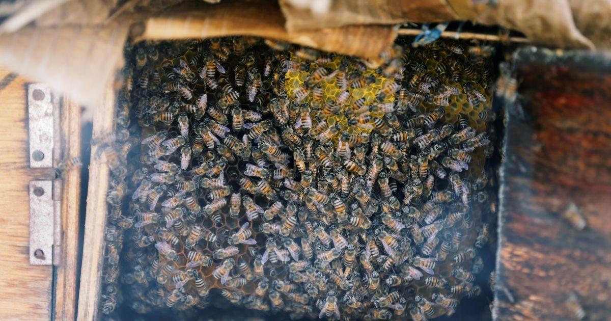 В Украине в этом году погибло до 45 тысяч пчелиных семей, каждая из которых стоит 2 тысячи гривен