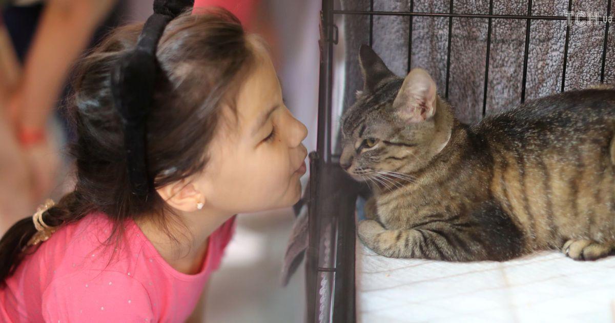 """Пушистая конвенция: на CatCon в США преодолевали мифы о """"помешанных на кошках женщинах"""""""