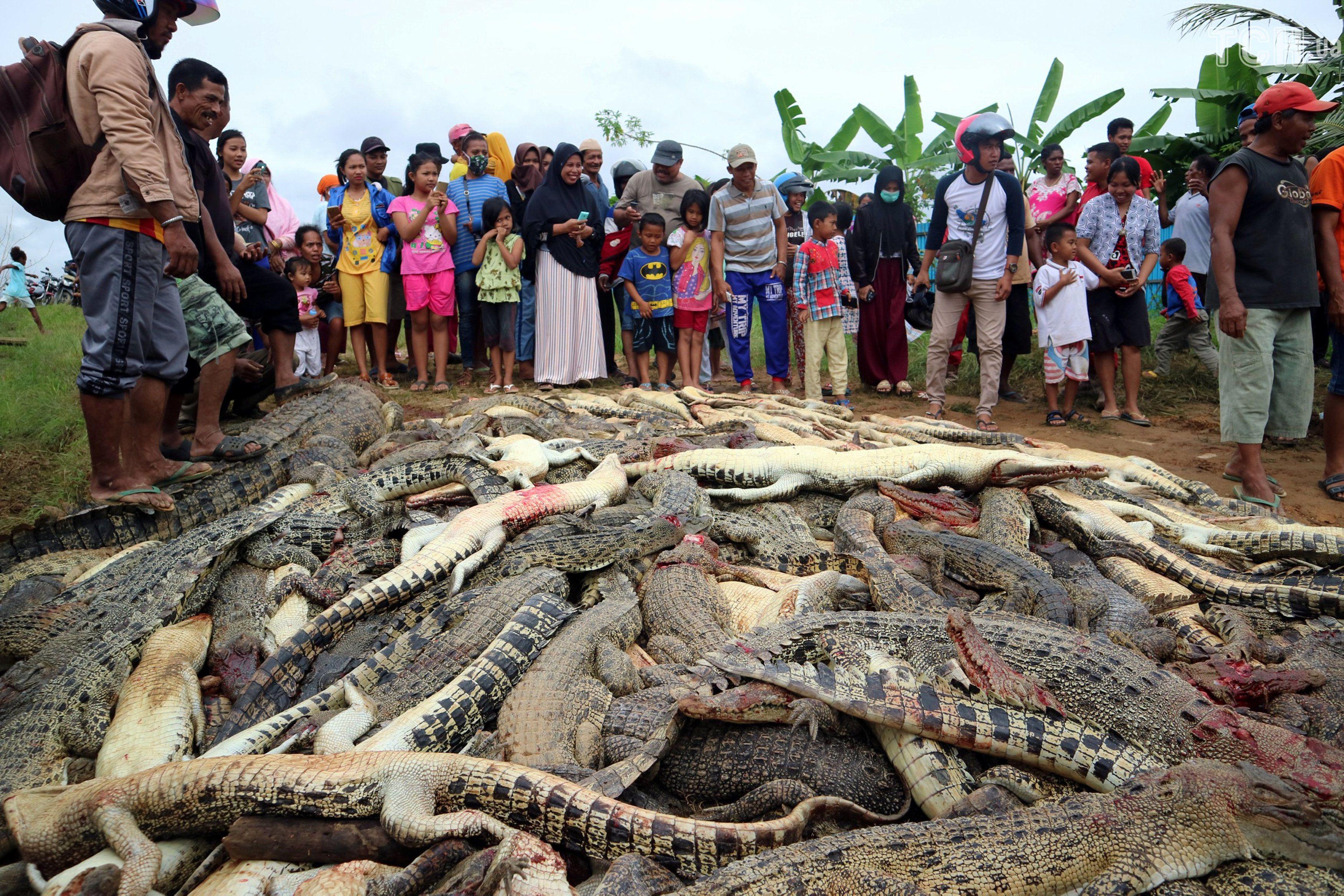 Вбивство крокодилів