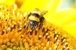 Австрийца приговорили к тюремному сроку за случайное убийство десятков колоний пчел