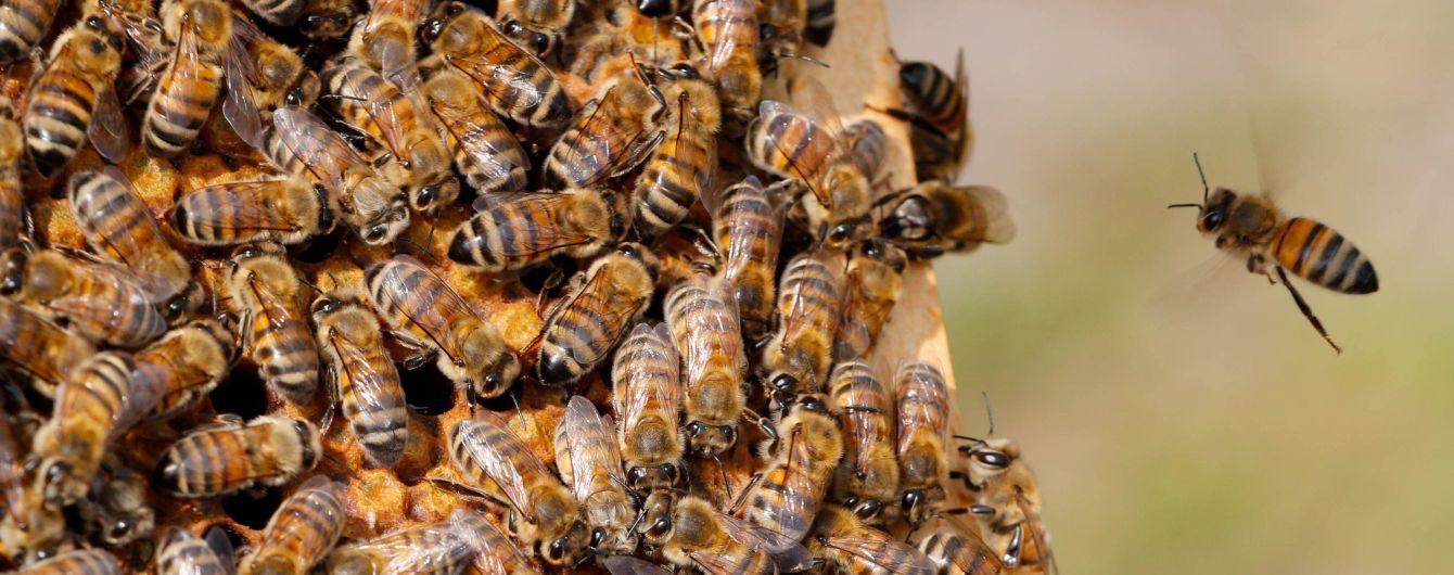 На Волыни внезапно начался мор пчел