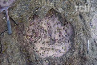У Шотландії знайшли сліди найбільшої тварини, яка коли-небудь ходила землею