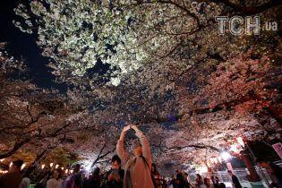 Сакуры ночью: японцы любуются цветением в невероятной иллюминации