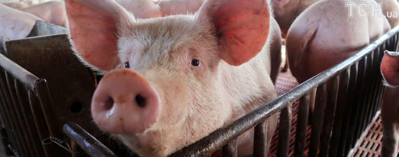 Подпольная свиноферма: на Буковине селянина обвинили в тайной деятельности