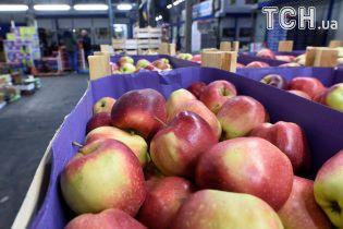 Україна майже вполовину вимушено скоротила експорт яблук