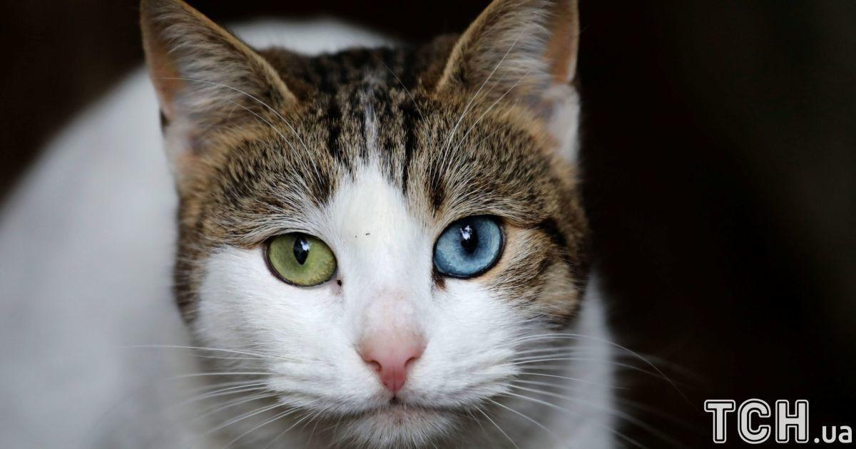 Разноглазые и дерзкие. Reuters показало жизнь четвероногих в кошачьей столице Стамбуле
