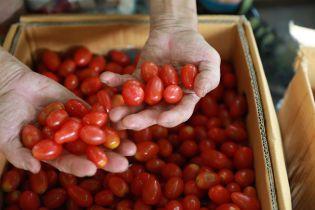 Перед новогодними праздниками подорожали томаты