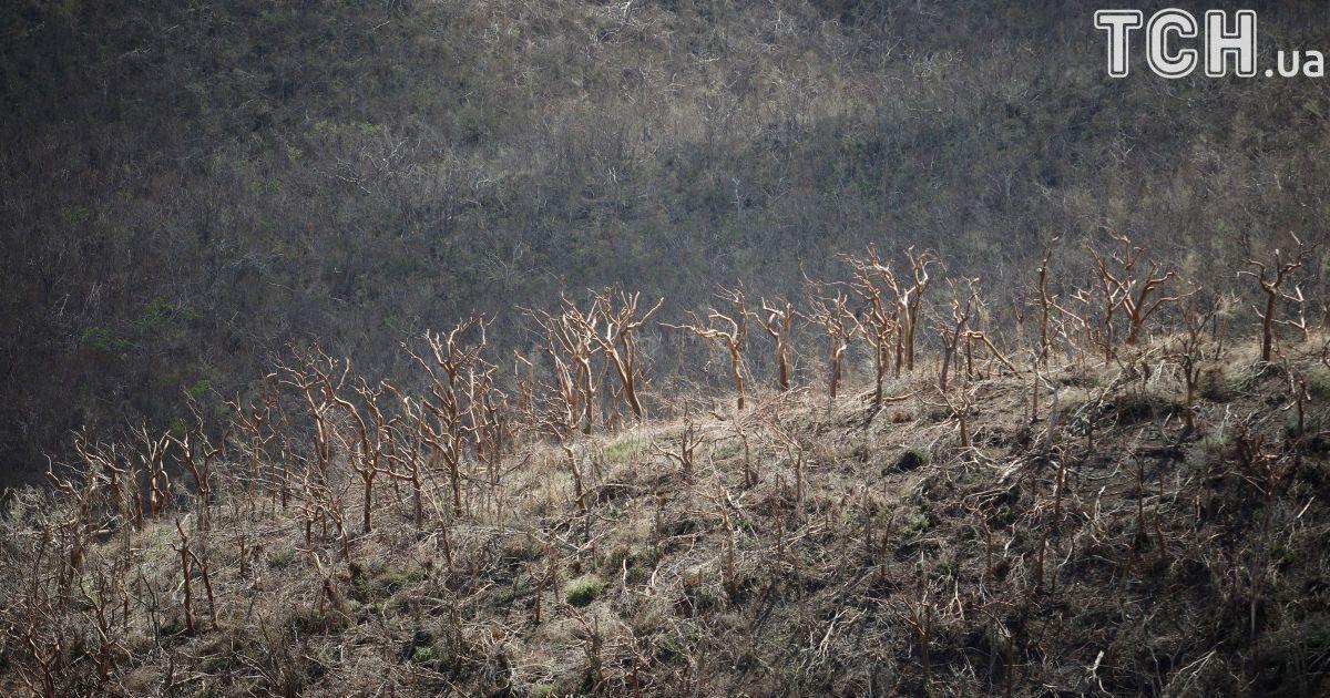"""Деревья обнаженные ураганом """"Ирма"""" линия на вершине холма на острове Сент-Джон."""