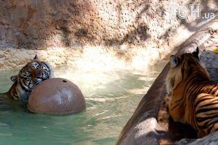 Веселые игры тигров в воде и фотогеничная лягушка: Reuters показало, как живут животные в зоопарке в США
