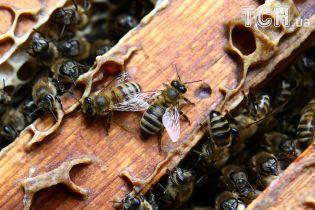Масова загибель бджіл на Дніпропетровщині. У пробах виявили речовину для знищення комах