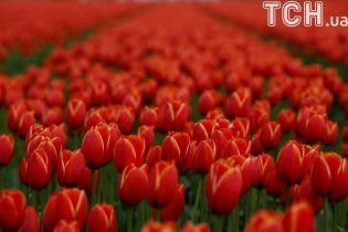 Вооруженные мужчины на иномарке отобрали ящик тюльпанов у цветочника в Кропивницком