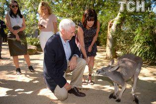 На коліна перед кенгуру. Віце-президент США розбудив тварину в сіднейському зоопарку