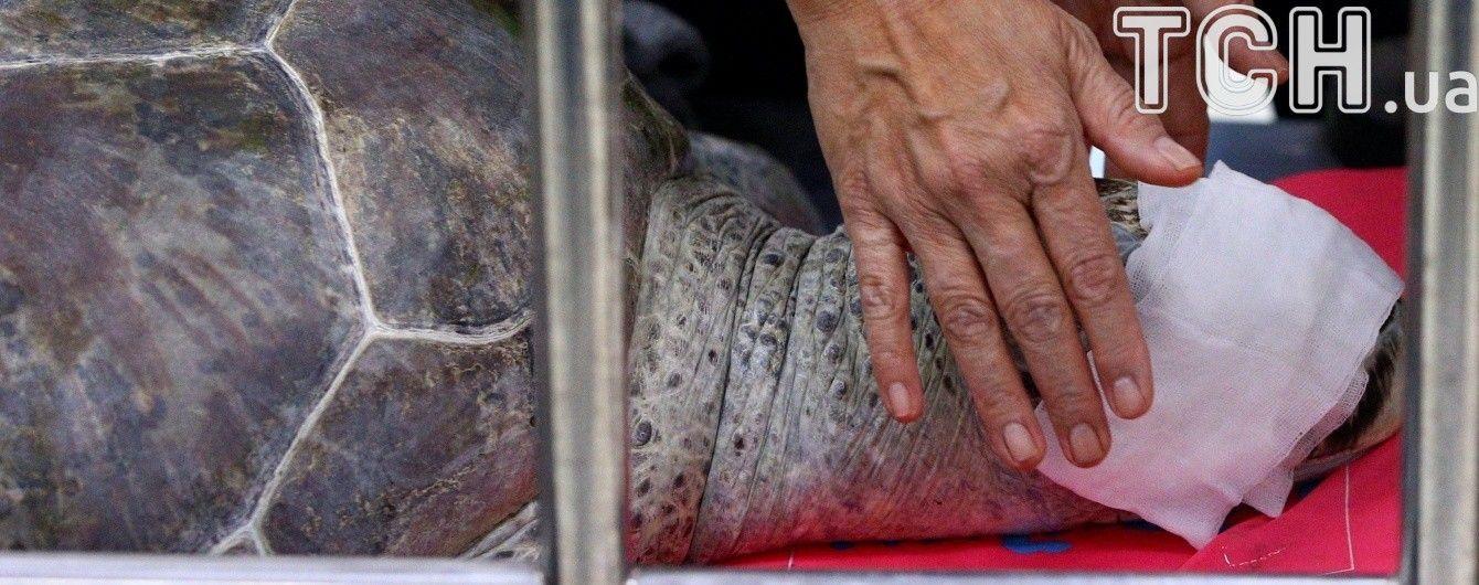 В Таиланде от заражения крови умерла черепаха, из которой достали почти тысячу монет