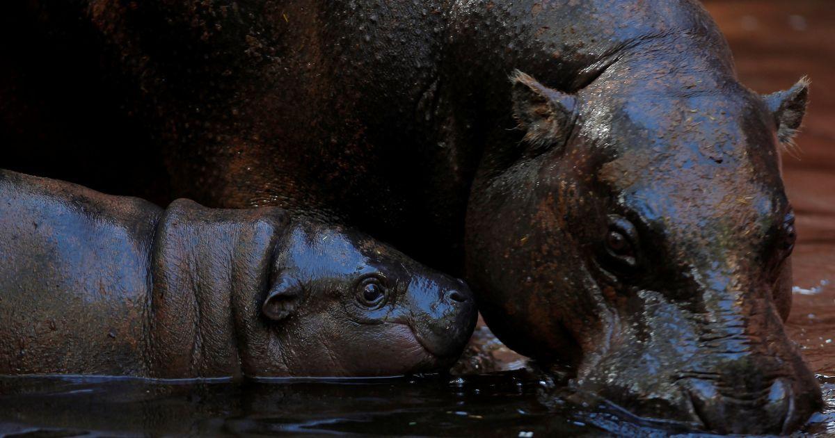Нимба и ее мамочка @ Reuters