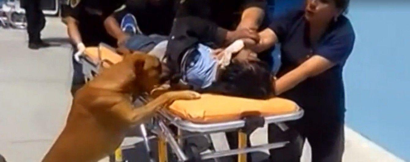 Справжня вірність. У Перу собаки поїхали до лікарні з господарем і не покидали його ні на мить