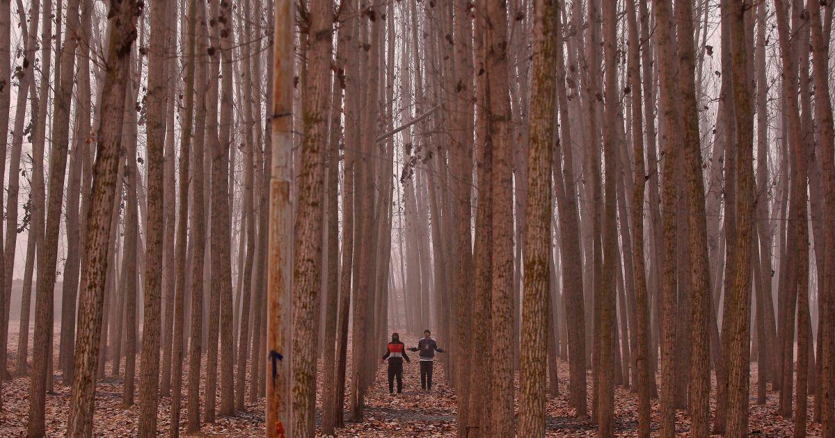 Чоловіки виконують вправи серед дерев у холодний зимовий ранок на околиці Срінагара, Індія. @ Reuters
