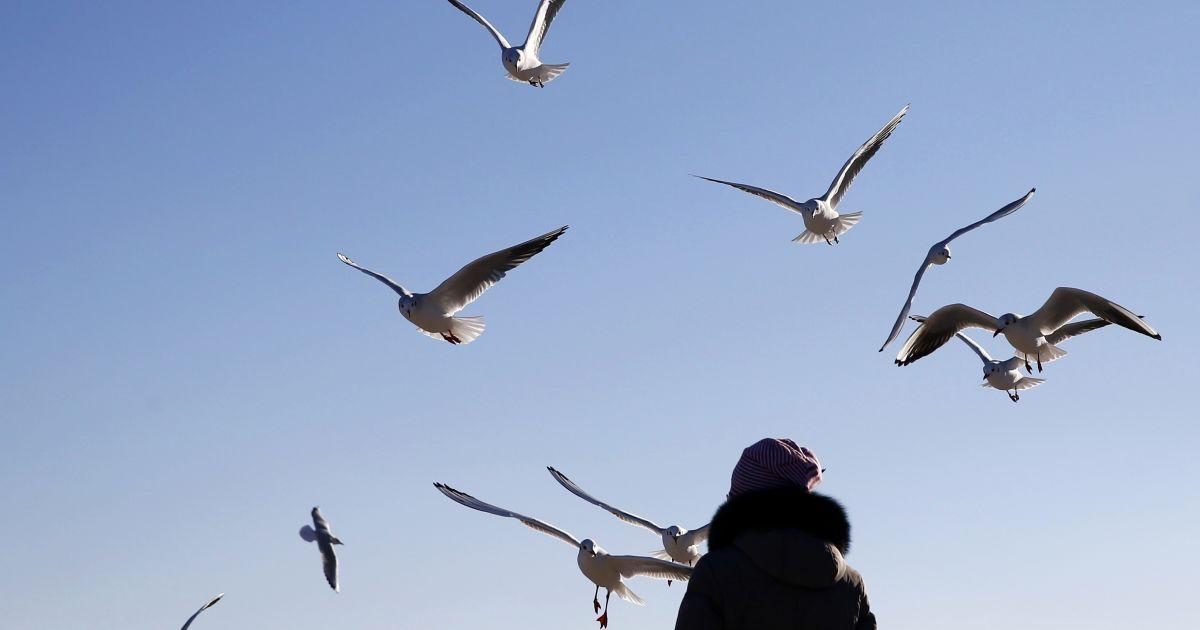 Жінка годує птахів на пляжі Ланжерон в Одесі. @ Reuters