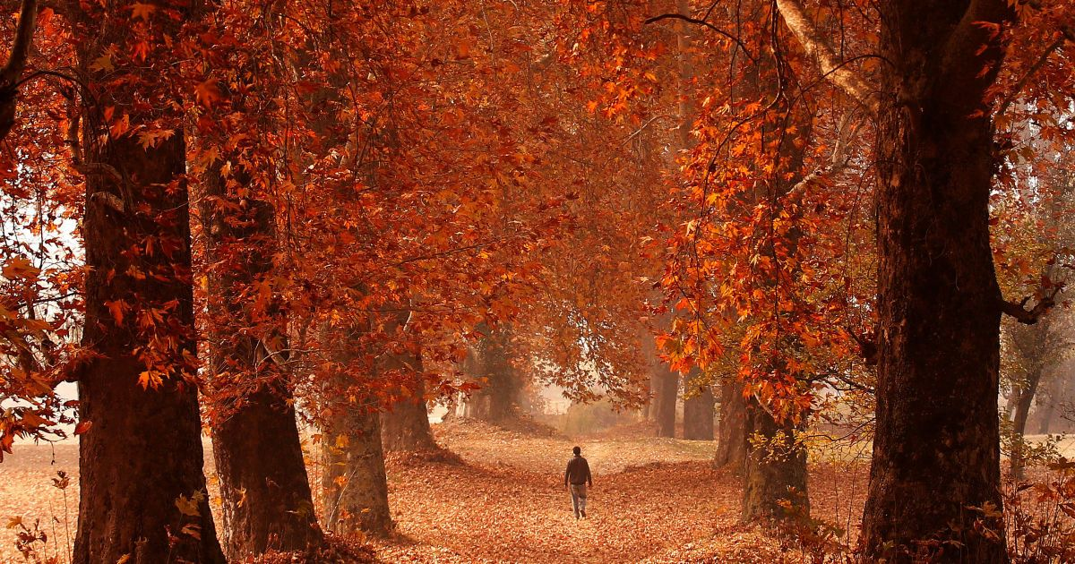 Людина проходить через сад в осінній день в Срінагарі, Індія. @ Reuters