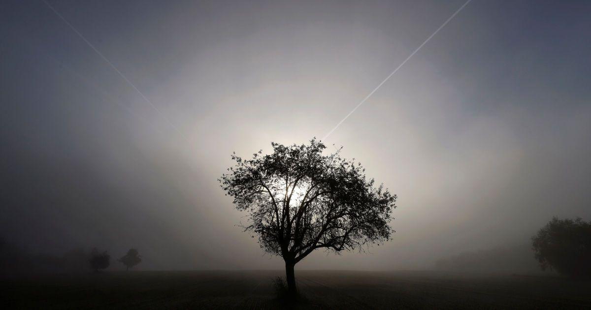 Дерево видно на початку ранкового тумані на поле між Ханау і Оффенбахом, Німеччина. @ Reuters