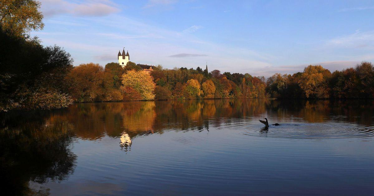 Две утки на берегу реки Майн у Ханау, Германия. @ Reuters