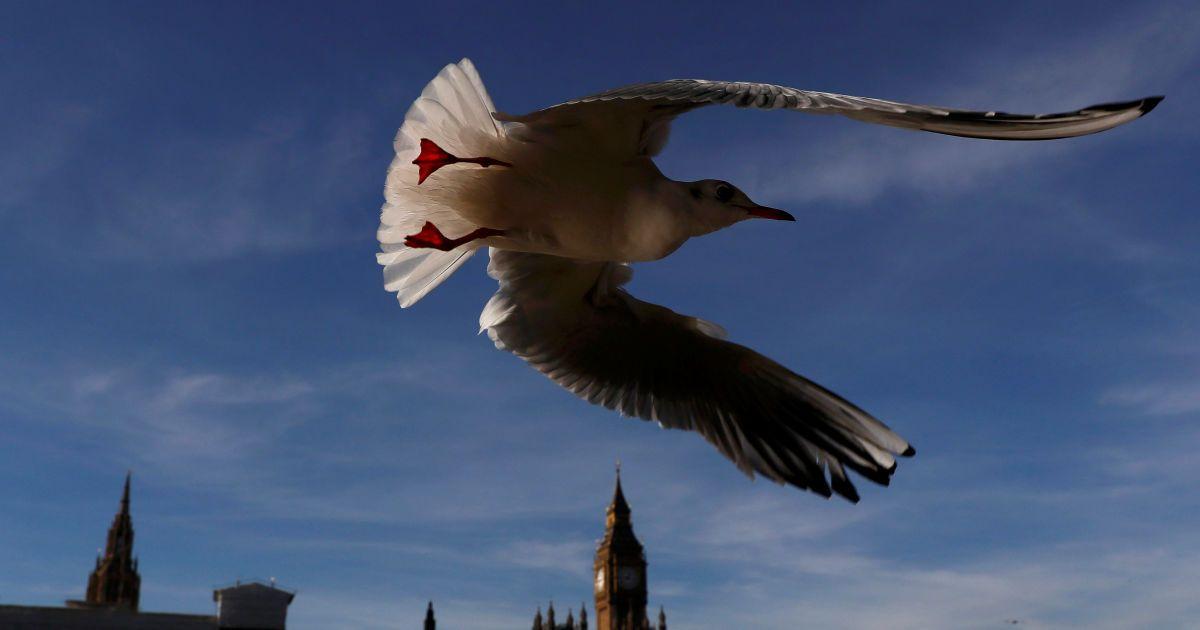 Чайка летит мимо здания парламента в центре Лондона, Великобритания. @ Reuters