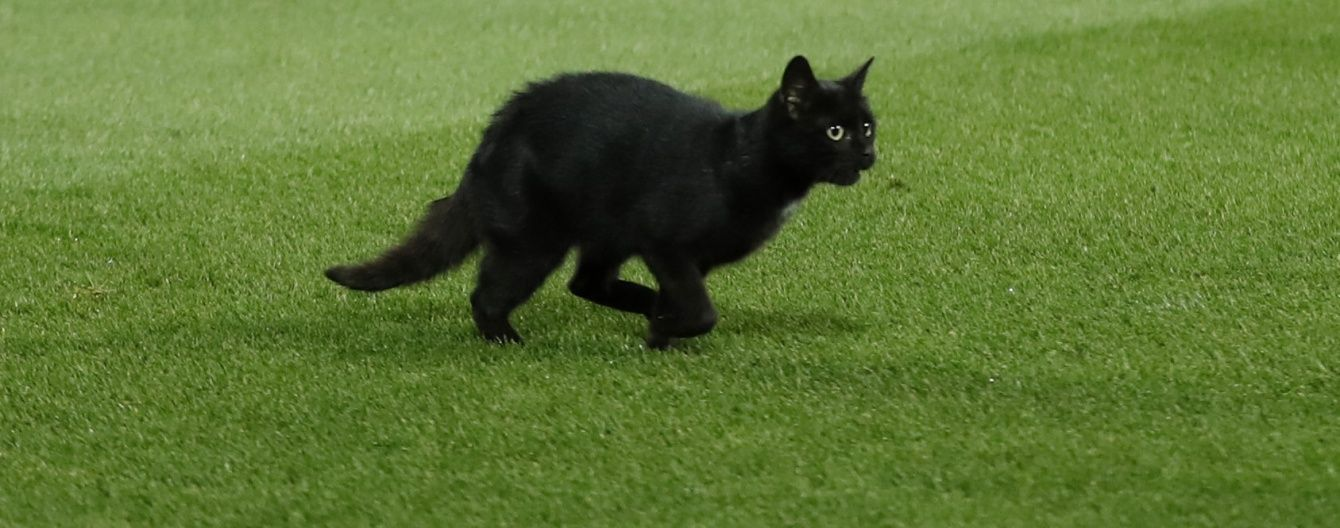 """Чорний кіт став зіркою Twitter під час матчу """"Ліверпуль"""" - """"Манчестер Юнайтед"""""""