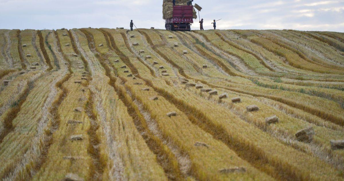 Люди працюють в полі у Синьцзян-Уйгурському автономному районі, Китай. @ Reuters