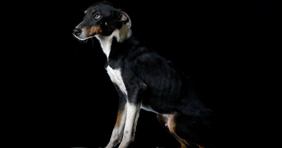 Собаки з притулку у Венесуелі @ Reuters