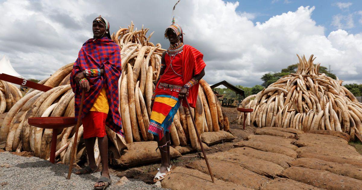 Чоловіки племені масаї у традиційному одязі позують фотографу біля конфіскованих бивнів слона, які складені на багатті в Національному парку поблизу Найробі, Кенія. @ Reuters