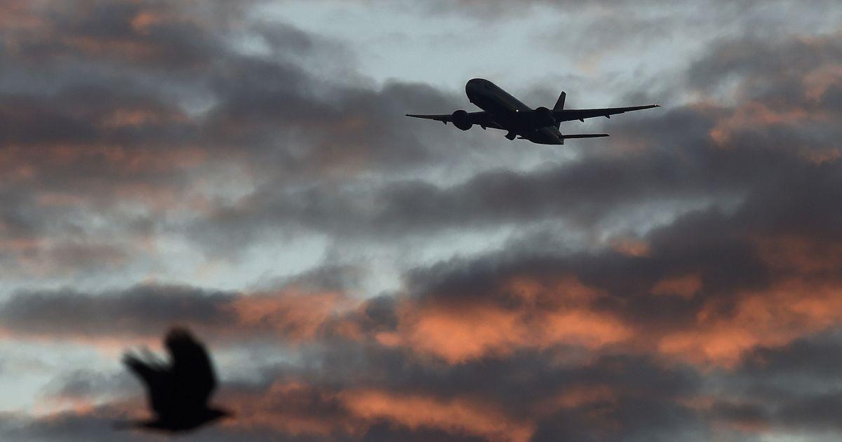 Птах летить на передньому плані, у той час як пасажирський літак йде на посадку у напрямку до аеропорту Хітроу в західній частині Лондона, Великобританія. @ Reuters