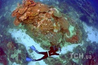 Знищення розміром з Німеччину. Вчені заявили про загибель найбільшого коралового рифу в світі