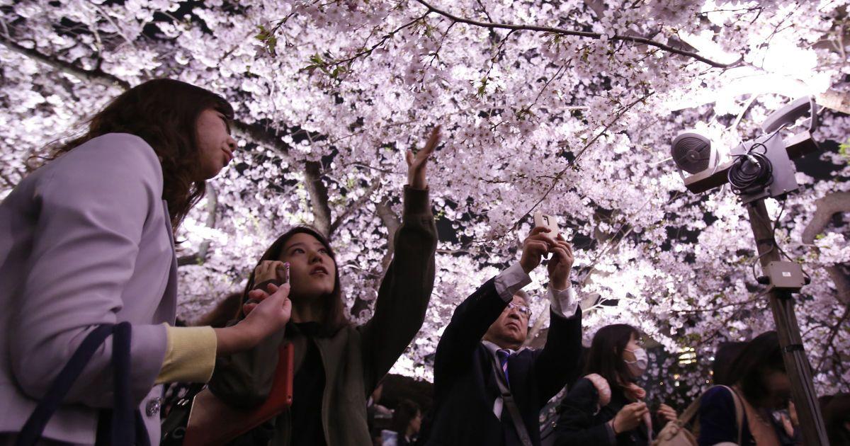 Цветущие сакуры в Токио @ Reuters