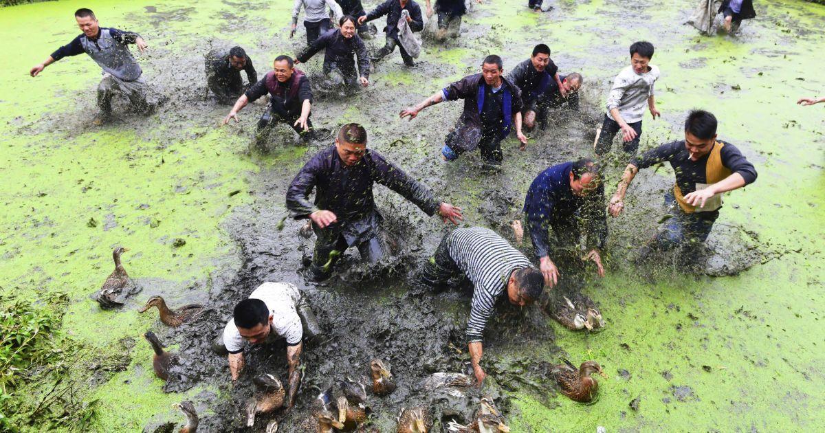 Селяни ловлять качок під час традиційного свята народу мяо у провінції Гуйчжоу, Китай. @ Reuters