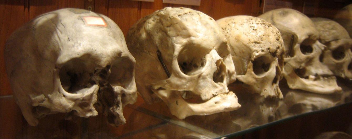 На Сумщині поліція відхрестилася від знайдених грибниками десятків людських кісток та черепів