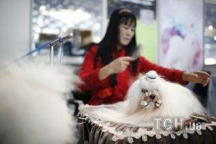 Модні собачі зачіски: у Китаї продемонстрували найстильніших песиків