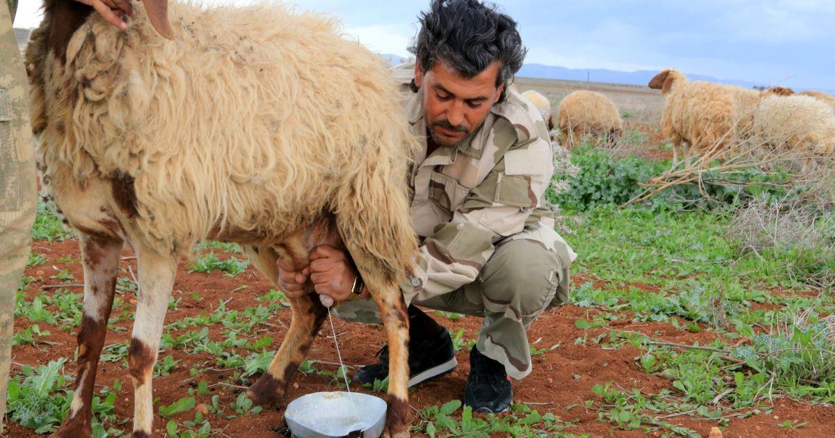 Сирийские повстанцы вблизи деревни Эль-Латамна.