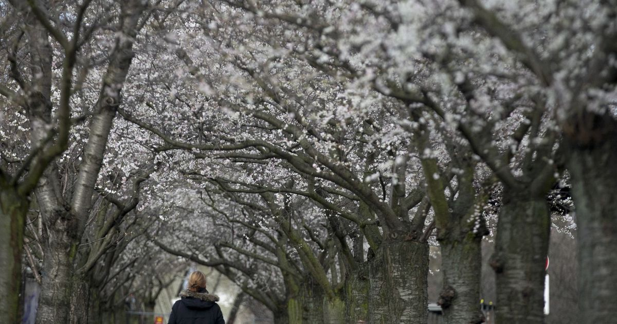 Берлин расцвел посреди зимы @ Reuters